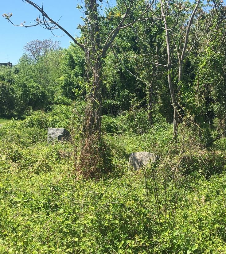 Mount Moriah Overgrown Tombstones