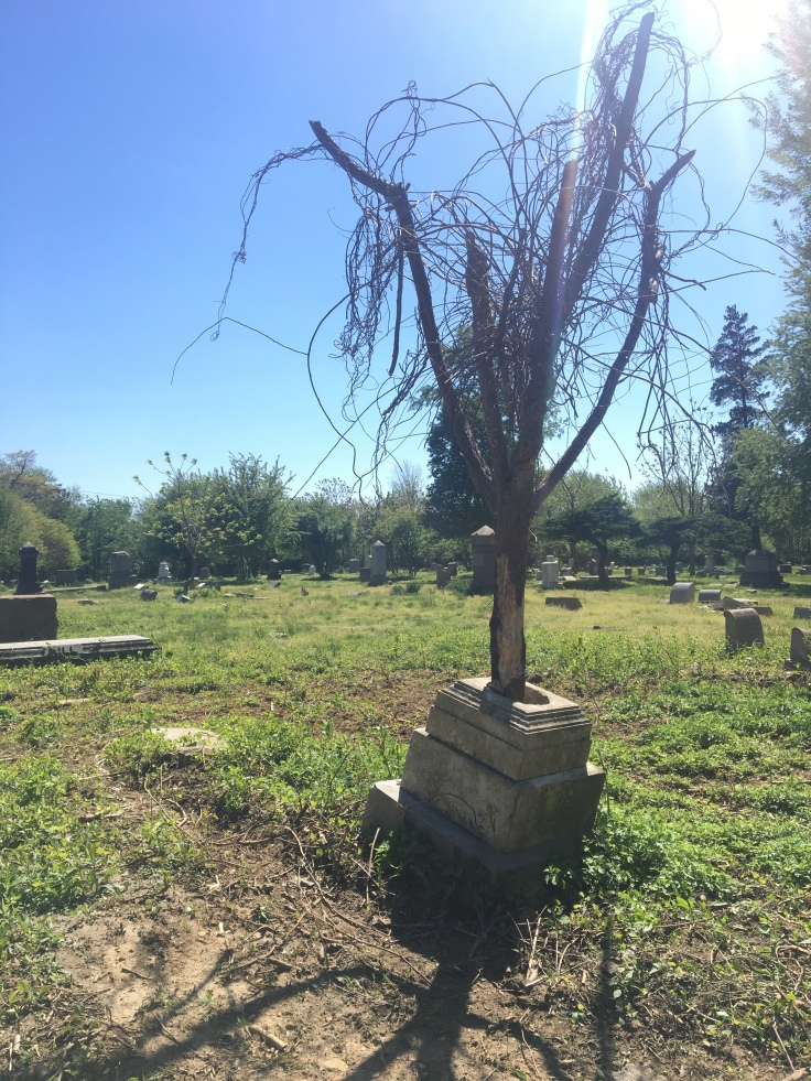 Mount Moriah Tree Grave